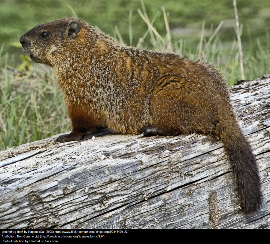 thursday is groundhog day u2013 here are related resources larry
