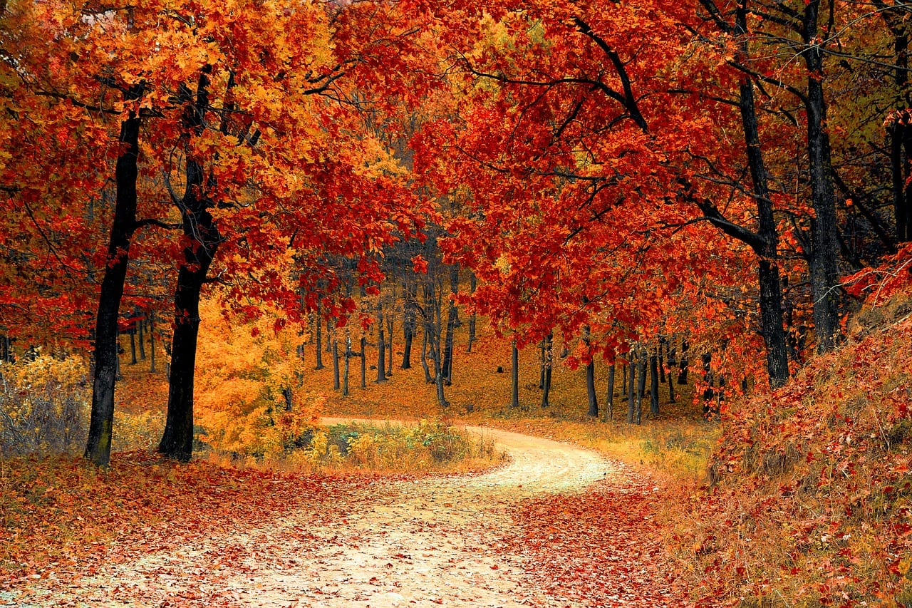 Today Is The First Day Of Fall – Here Are Resources To Help Teach About It