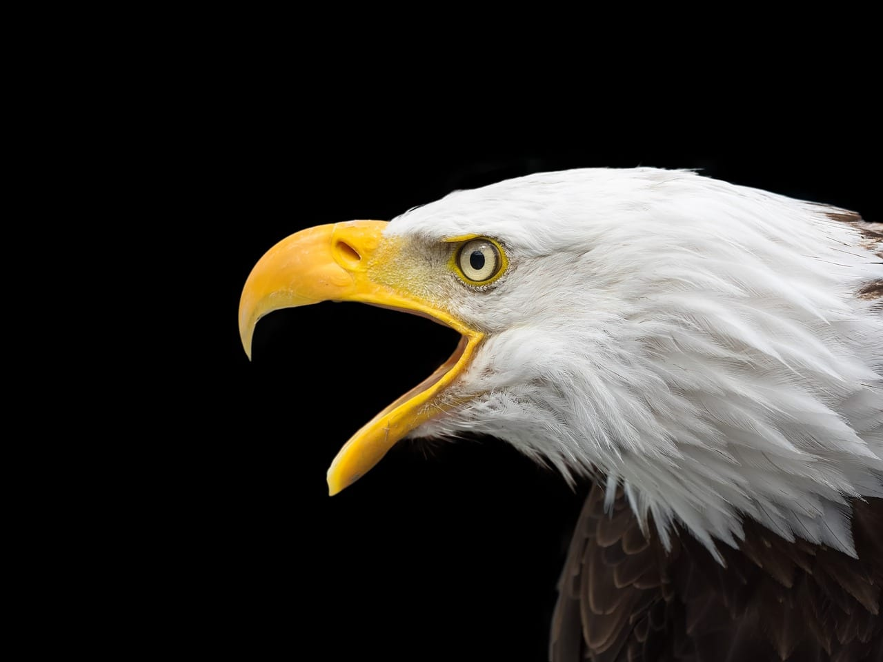 """Interactive: """"America's Most Endangered Species"""""""