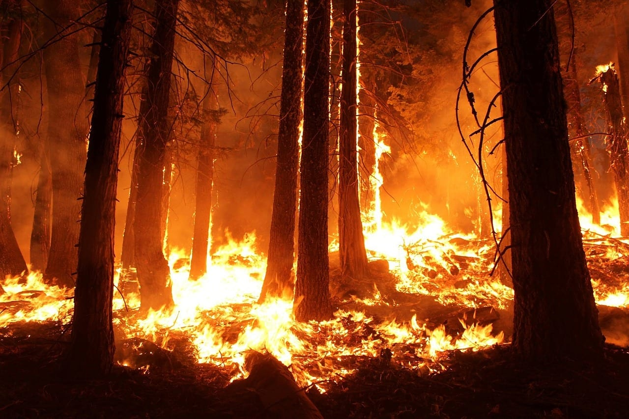 Weather Channel's New Immersive Reality Video On Forest Fires