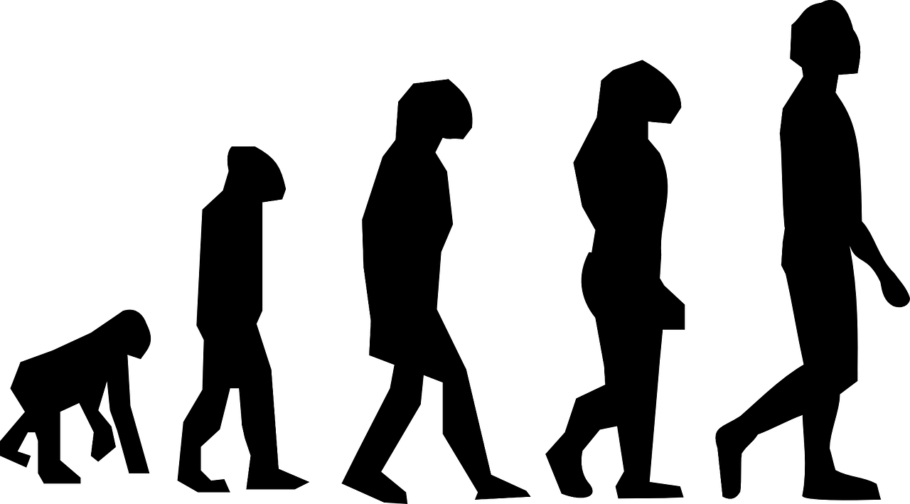 "Video: ""Seven Million Years of Human Evolution"""