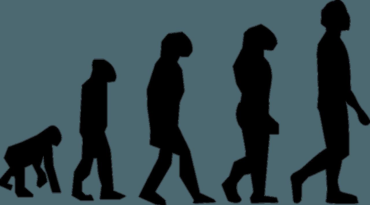 "Video: ""Seven Million Years of Human Evolution"""
