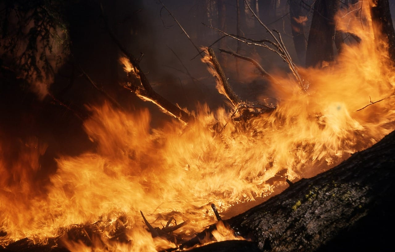 """Video: """"The science behind California's surging wildfires"""""""