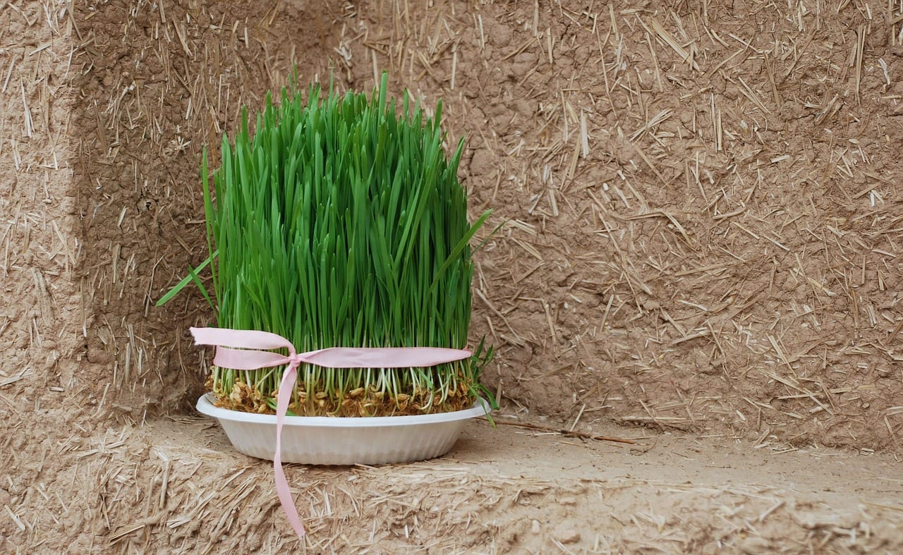 Four Videos About Nowruz, The Persian New Year