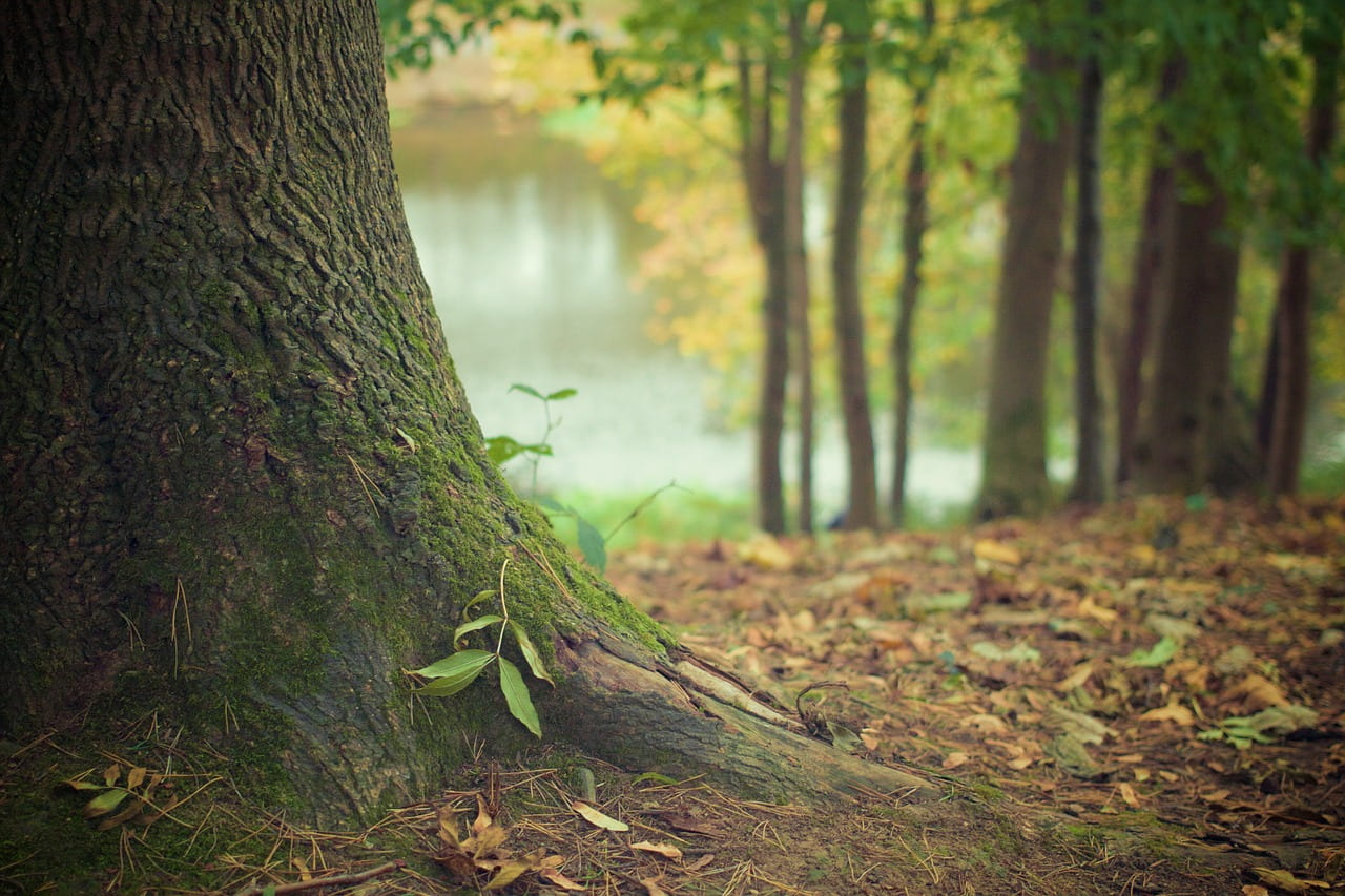 """New TED-Ed Video: """"The secret language of trees"""""""