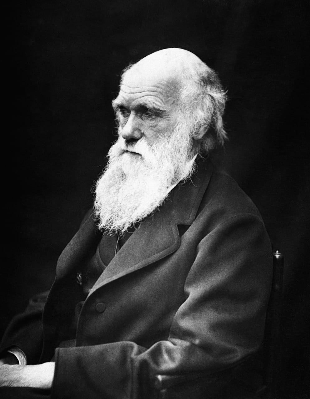 "New BBC Video: ""Charles Darwin's theory of evolution explained"""