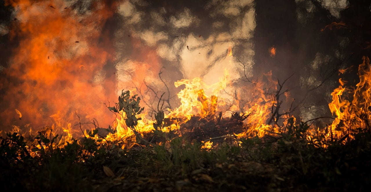 """Video: """"FireStorm: How Wildfires Are Spread"""""""