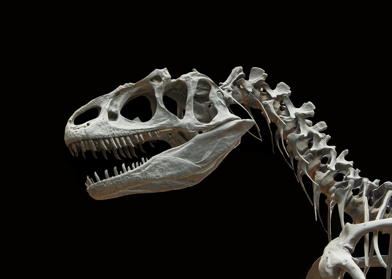 """Video: """"Top 5 Dinosaur Moments"""" From The BBC"""