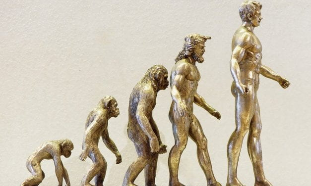 """New TED-Ed Video & Lesson: """"Is human evolution speeding up or slowing down?"""""""