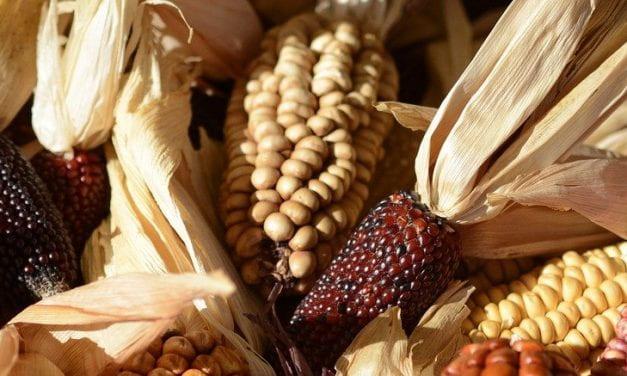 Three New Thanksgiving Teaching Resources