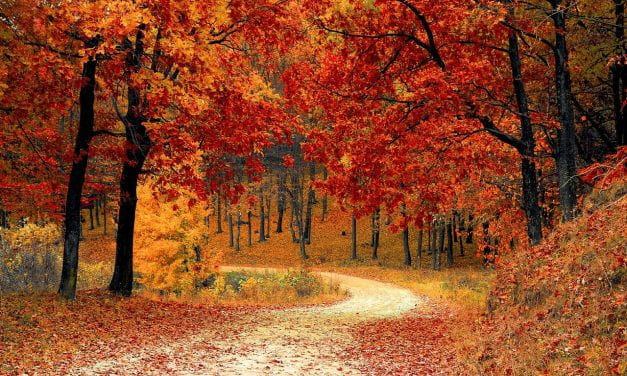 Resources For Teaching About The Fall Season